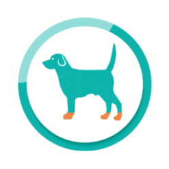 Hundeschuhe und Hundesocken