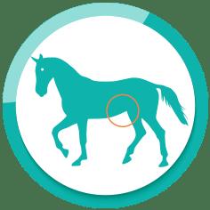 Darmgesundheit Pferde