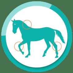 Produkte für Gelenke, Muskeln und Knochen des Pferdes